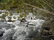 Percorso verde sul fiume  Nestore nei pressi di Sant 'Apollinare